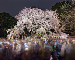 Hanami 20, Rikugien Sunday, March 29th, 2015. Archival pigment print. © Matthew Pillsbury. Exhibitor: Benrubi Gallery