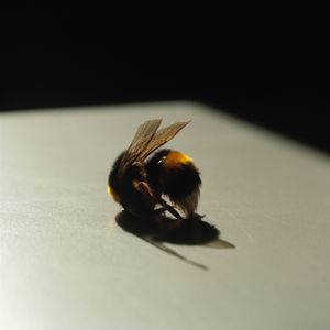 Bee, from the series Still Here © Lydia Goldblatt
