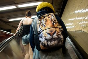 Untitled (tiger backpack), 2013