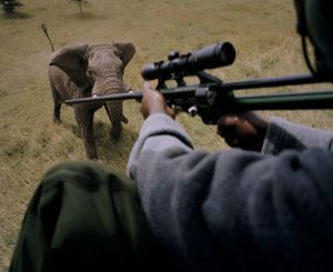darting elephant, ol pejeta conservancy, northern kenya-from the series 'with butterflies and warriors'-David Chancellor
