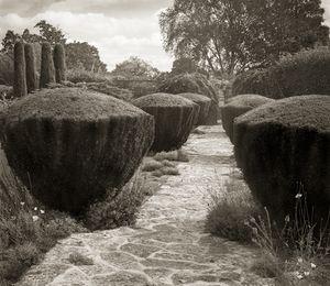 "Topiary, Barnsley House, 18.5x16"" Platinum Palladium © Beth Dow"