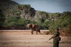 Anti-poaching Patrol - Sera Conservancy