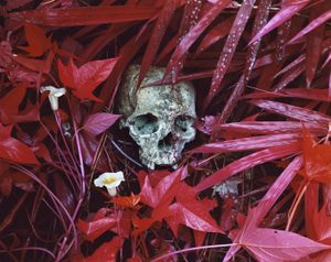 Of Lilies and Remains, Eastern Congo, 2012 © Richard Mosse. Courtesy of the artist and Jack Shainman Gallery.