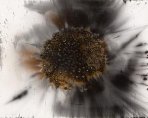 Untitled Work of Fire .032 8x10 Unique gunpowder generated gelatin silver print.