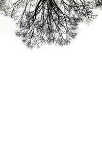 Roots © Davide Weber