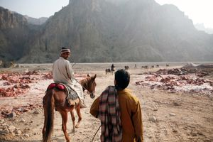 During the night donkeys are still used at the remote Kalabagh salt mine. Reaching areas that tractors still can't get to, the donkeys carry the rock salt to areas that is then collected and taken out of the mine during the day by tractors.