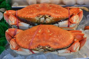 Crabs, Maine Ave. Seafood Market, Washington, D.C.