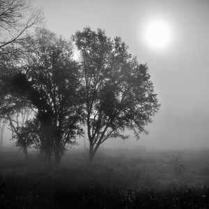 Forest Fog 9