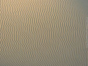 Sandy Lines