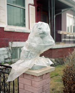Wrapped Lion, 2015