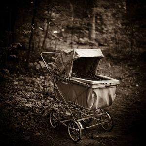 Empty Nest  © Lori Vrba