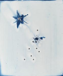 Cyanotype Evidence