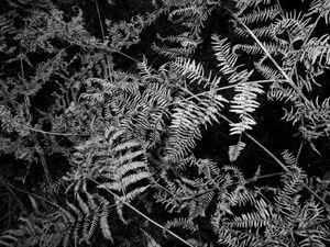 INNER FOREST V