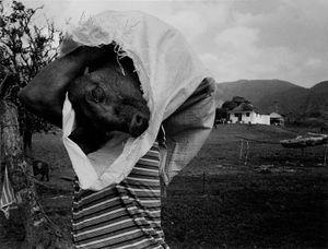 Pigman © Susan S. Bank