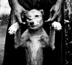 A dogs fate.