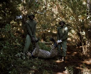 leopard and rangers, kisimi, northern kenya-from the series 'with butterflies and warriors'-David Chancellor-