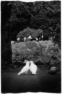 1382 © Masao Yamamoto