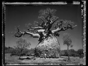 Baobab 29 Madagascar 2010 © Elaine Ling