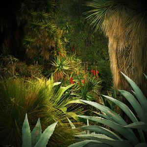 Jungles 03 © Olivia Lavergne