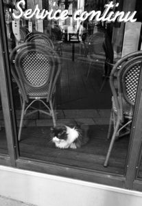 Parisian Café Cat