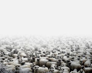 Sheep farm (Silvasu de Sus, West Romania), 2011 © Tamas Dezso