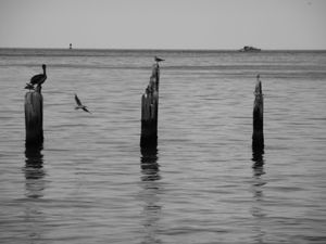 Birds on Posts, Key West