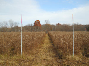 Orange Posts at Vassar Farm