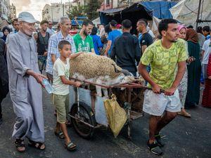 Getting a sheep