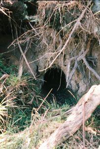Wombat Hole, Warburton.