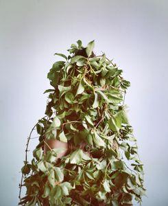 Camouflage au Feuillage © Marie Hudelot
