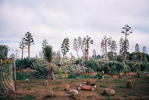 Cactus County, Cobram