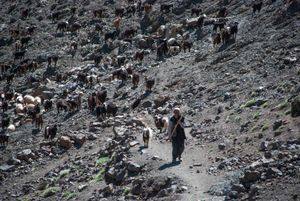 The Shepherd. Tachdirt, Morocco