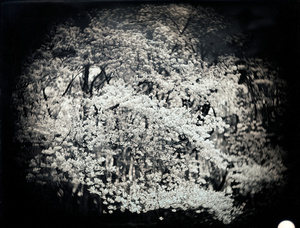 """Setagaya, Tokyo, from the series """"OfMirrors in Our Nights."""" April 10, 2011"""