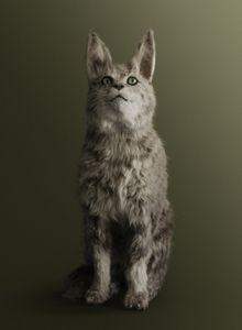 CAT [Felis spiritae] Psychic medium for communications with the spirit world.