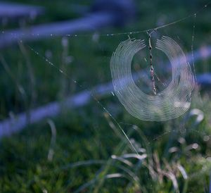 perfect web
