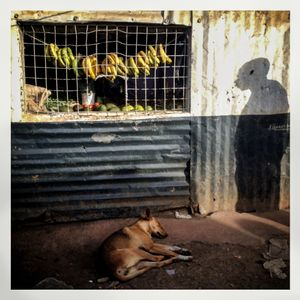 A dog sleeps and a man's shadow is seen in front of a kiosk selling vegetables in Kibera. The Kibera slum is the largest slum in Nairobi with around half a million inhabitants.
