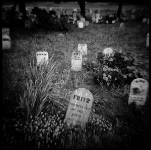 Pet Cemetery in The Presidio, San Francisco, CA