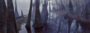 Ichetucknee Cypress
