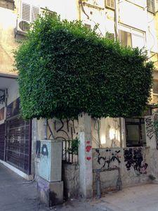 Urban nature 4