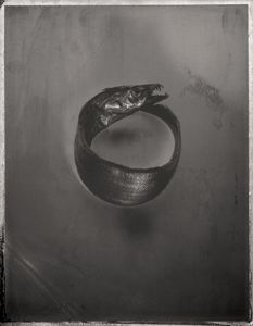 Beltfish, Trichiurus lepturus