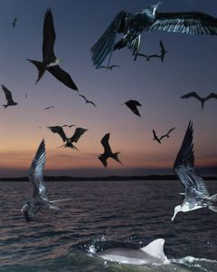 Dolphin friend's, Ecuador, 2015