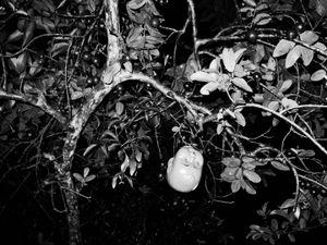 Poison © Aji Susanto Anom