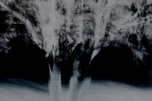 Untitled (Trees 10)