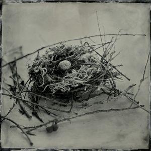 S Gayle Stevens - Nests | LensCulture