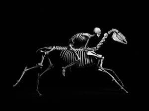 Evolution © Patrick Gries