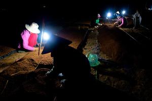 Night tree planting.