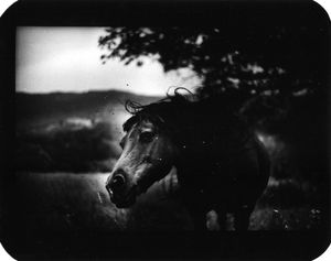 """Untitled"" (Horse Shaking Head), 2006 © Giacomo Brunelli"