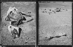 Drought, Gobi Desert (Nomadic Mongolia #7), 2002. © Elaine Ling