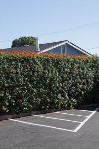 House, Hedge, Parking Lot, Foothill Blvd, La Crescenta