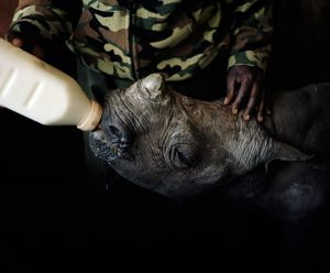 orphan black rhino # II, lewa conservancy, kenya-from the series 'with butterflies and warriors'-David Chancellor